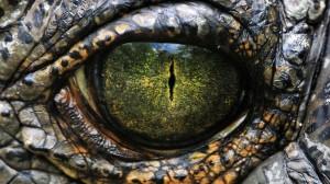alligator-eye-wallpaper-1920x1080