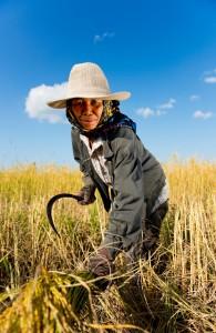 hard working rice farmer